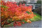 Herbst in Baden Baden 02