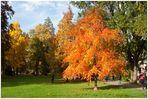Herbst in Baden-Baden