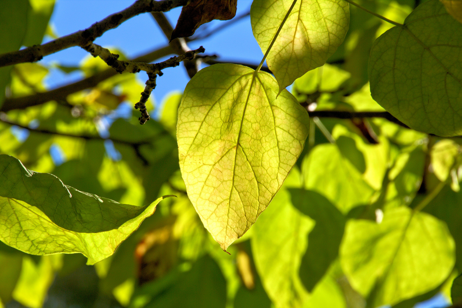 Herbst in Boltenhagen