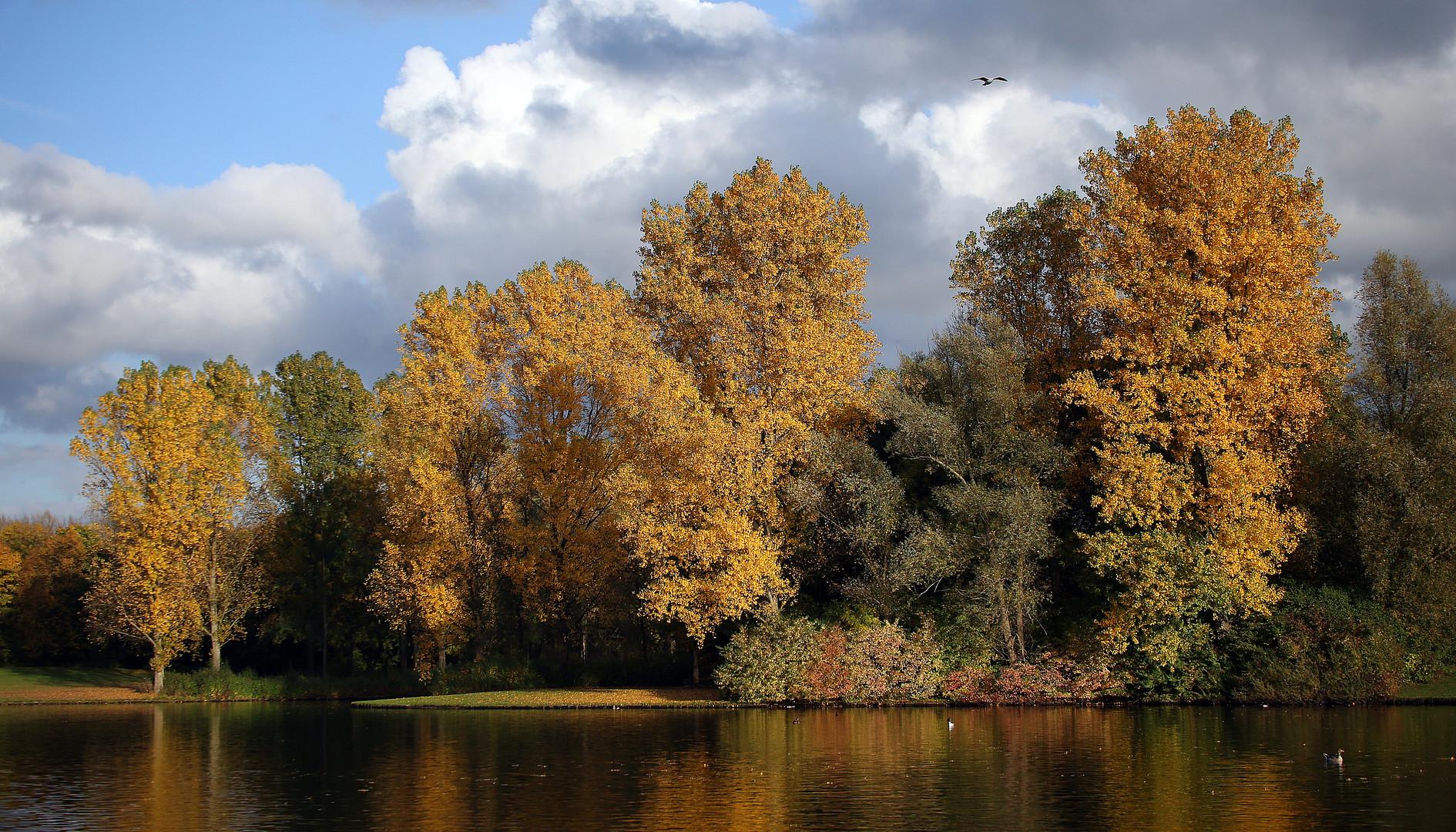 Herbst in Bonn