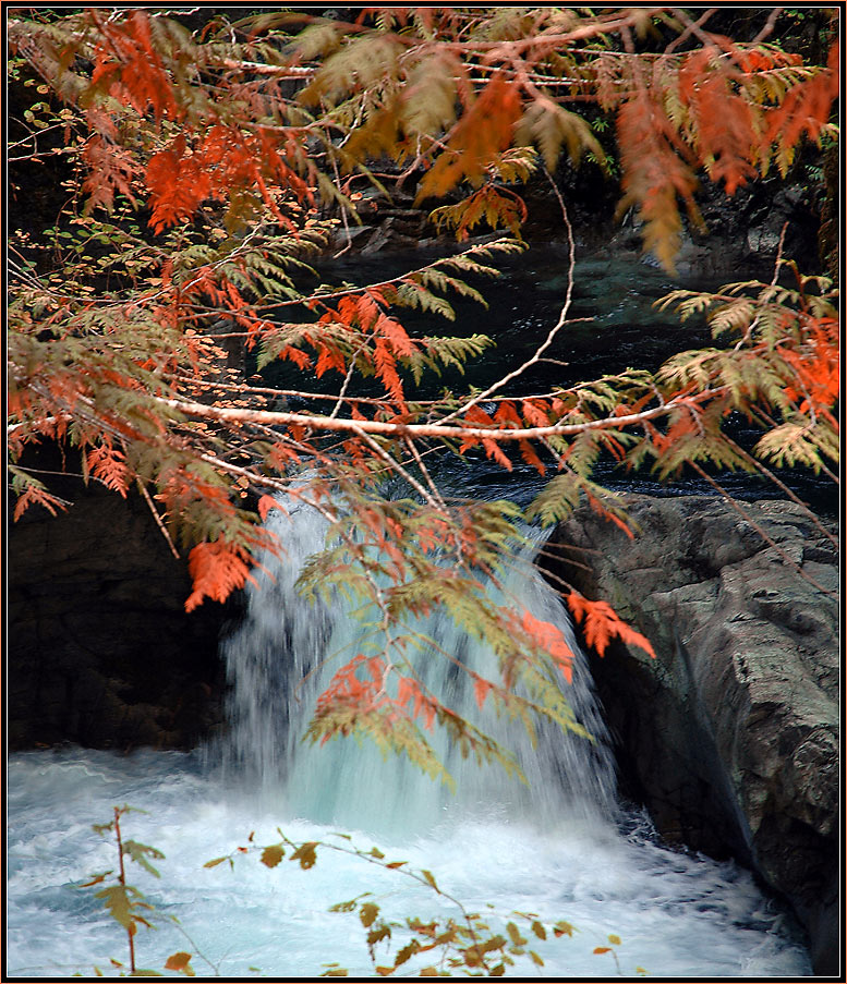 Herbst in Canada