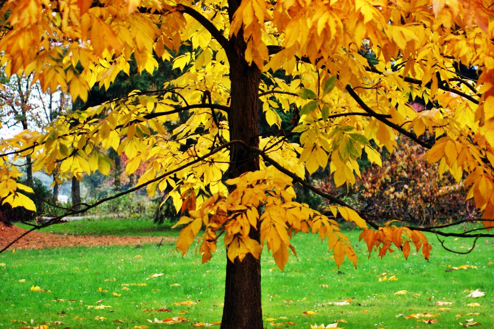 Herbst in Dänemark