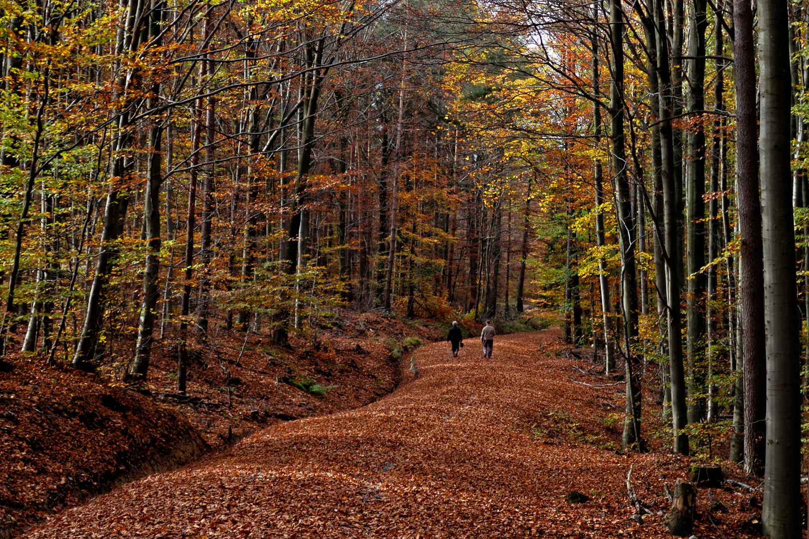 Herbst in den Löwensteiner Bergen