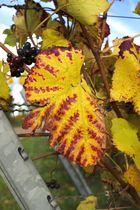 Herbst in den Reben
