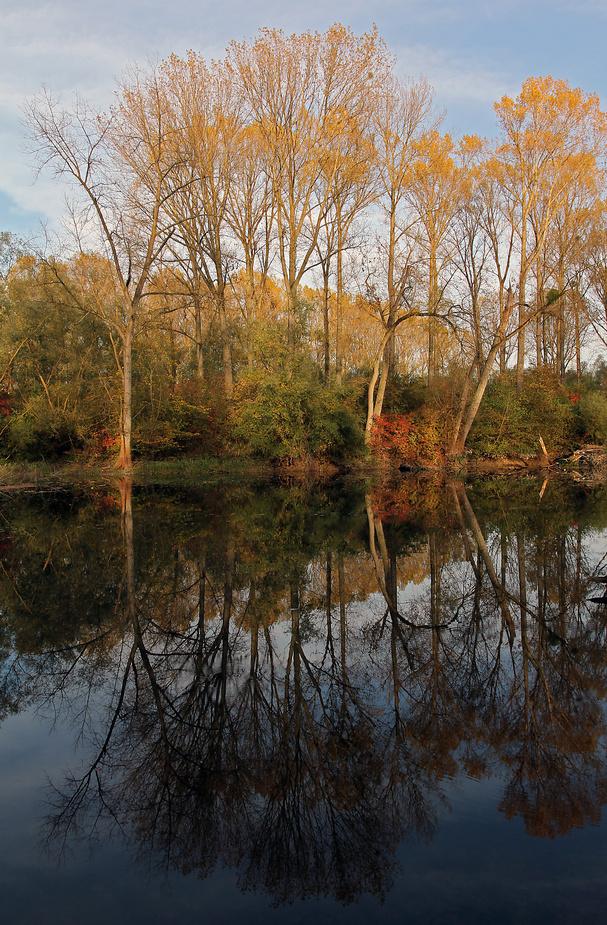 Herbst in den Rheinauen