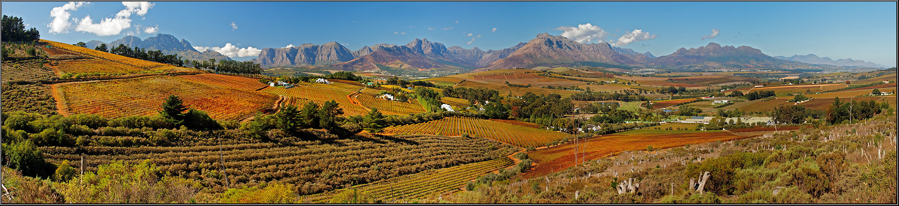 Herbst in den Winelands