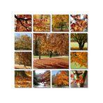 Herbst in der Allee…