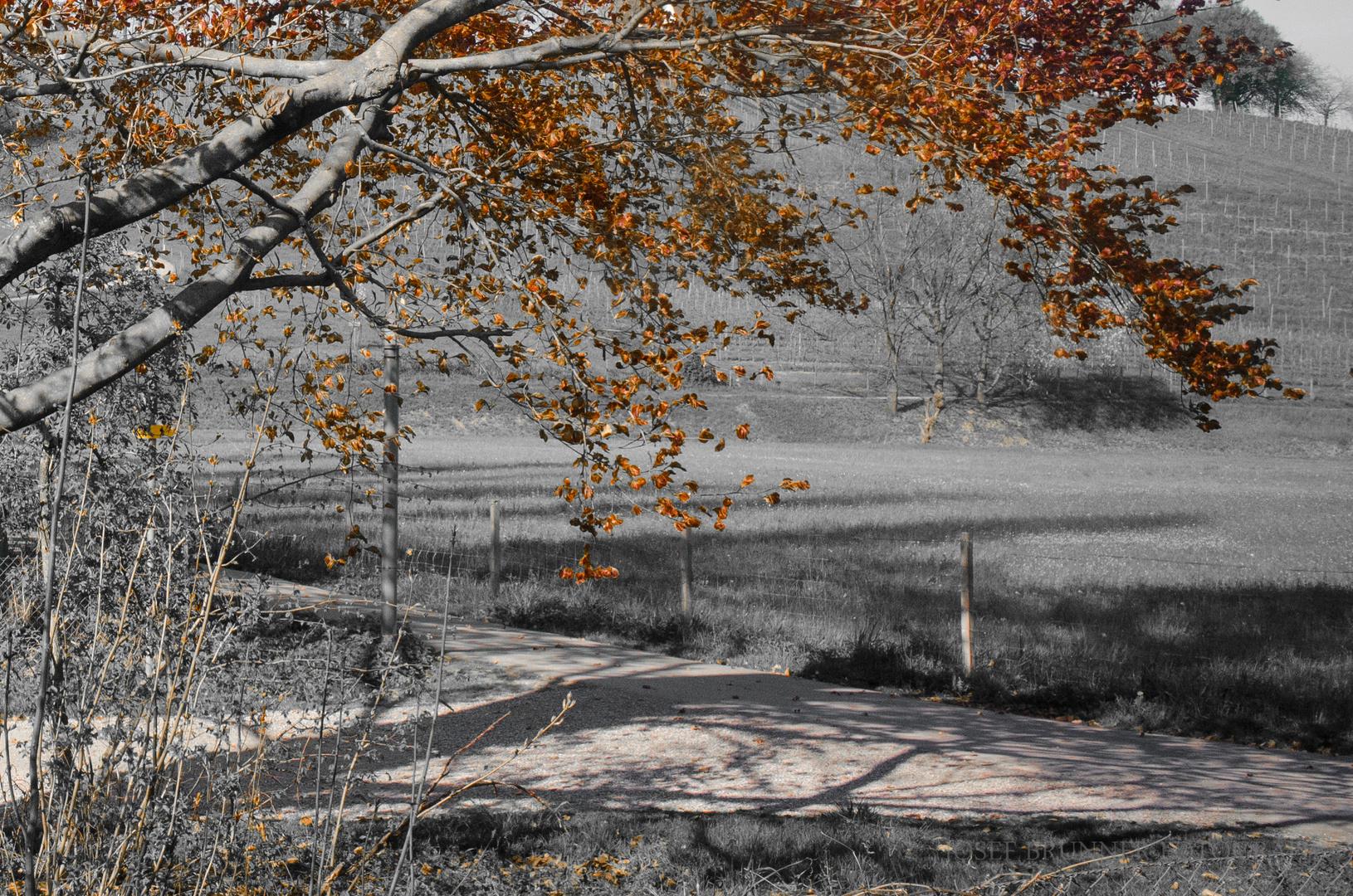 Herbst in der Au