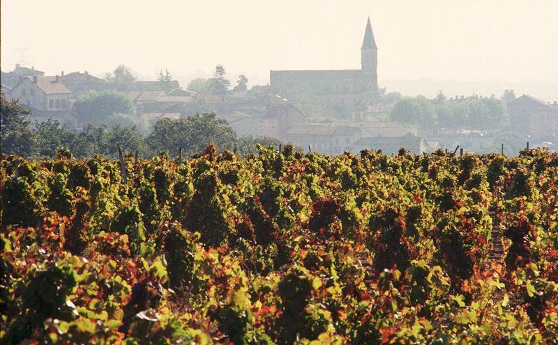 Herbst in der Burgund