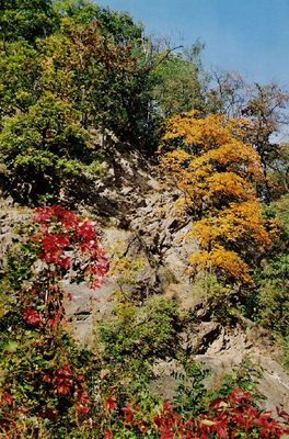 Herbst in der Dresdner Heide