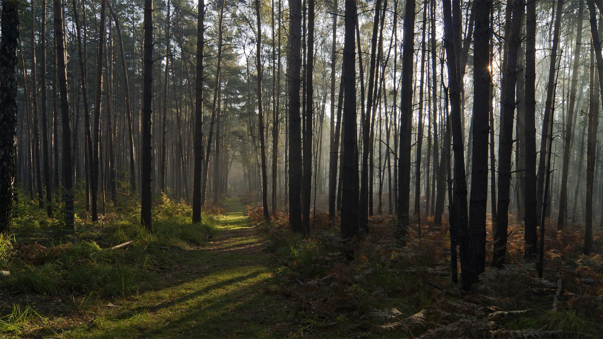 Herbst in der Dübener Heide bei Torgau