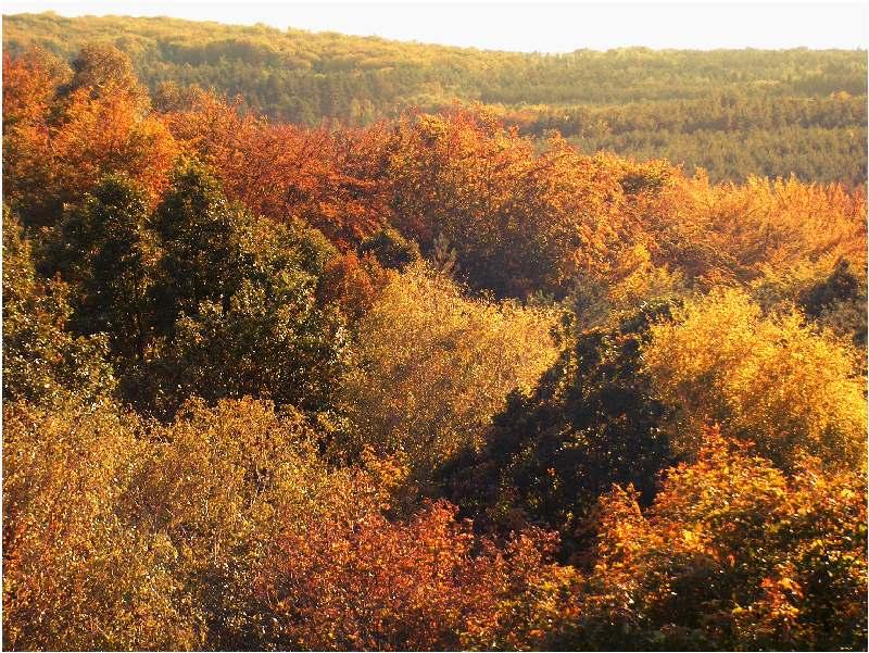 Herbst in der Düdener Heide