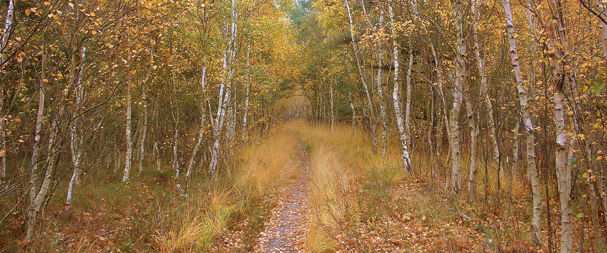 Herbst in der Dünenheide