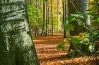 Herbst in der Eilenriede - Hannover