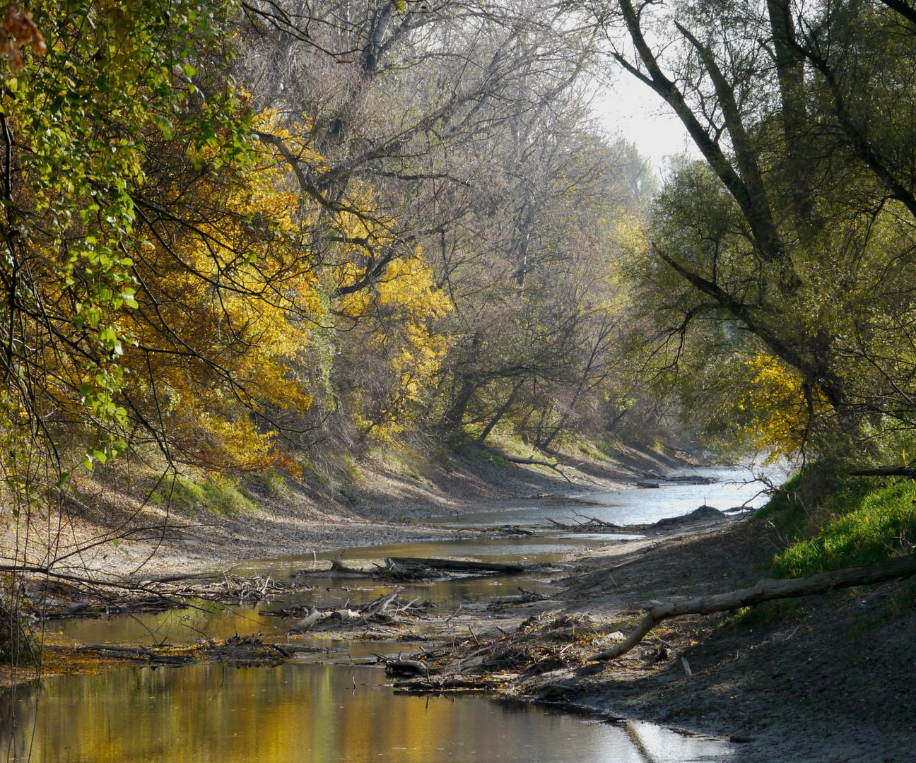 Herbst in der Hainburger Au