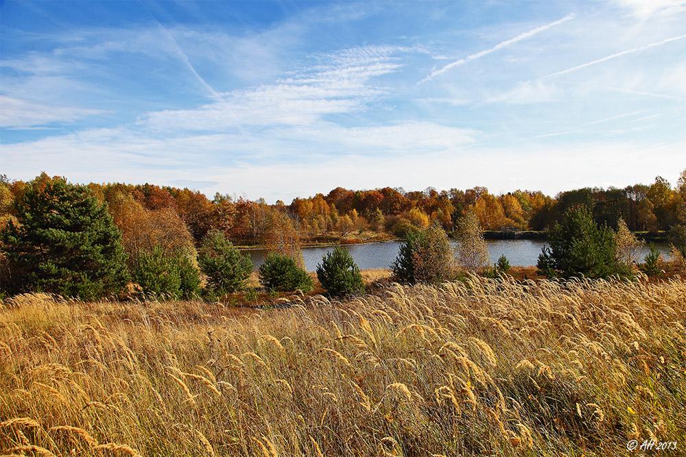 Herbst in der Heide - 1