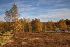 Herbst in der Heide - 3