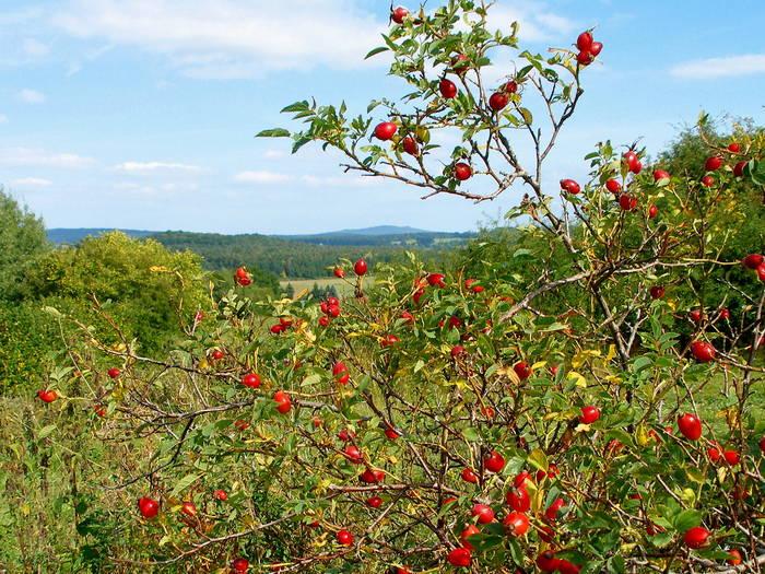 """"""" Herbst in der Landschaft """" * 1 *"""