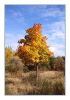 Herbst in der lausitz