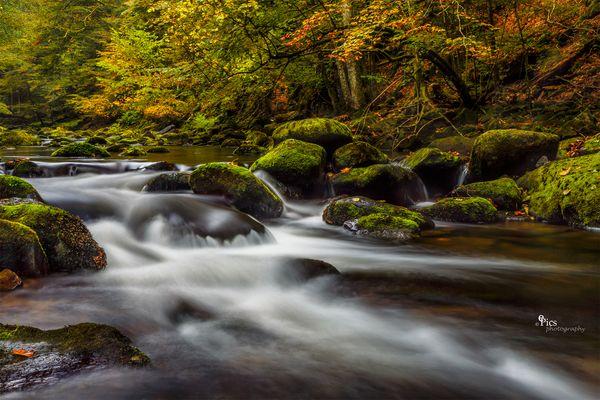 Herbst in der Leitn - Bach369
