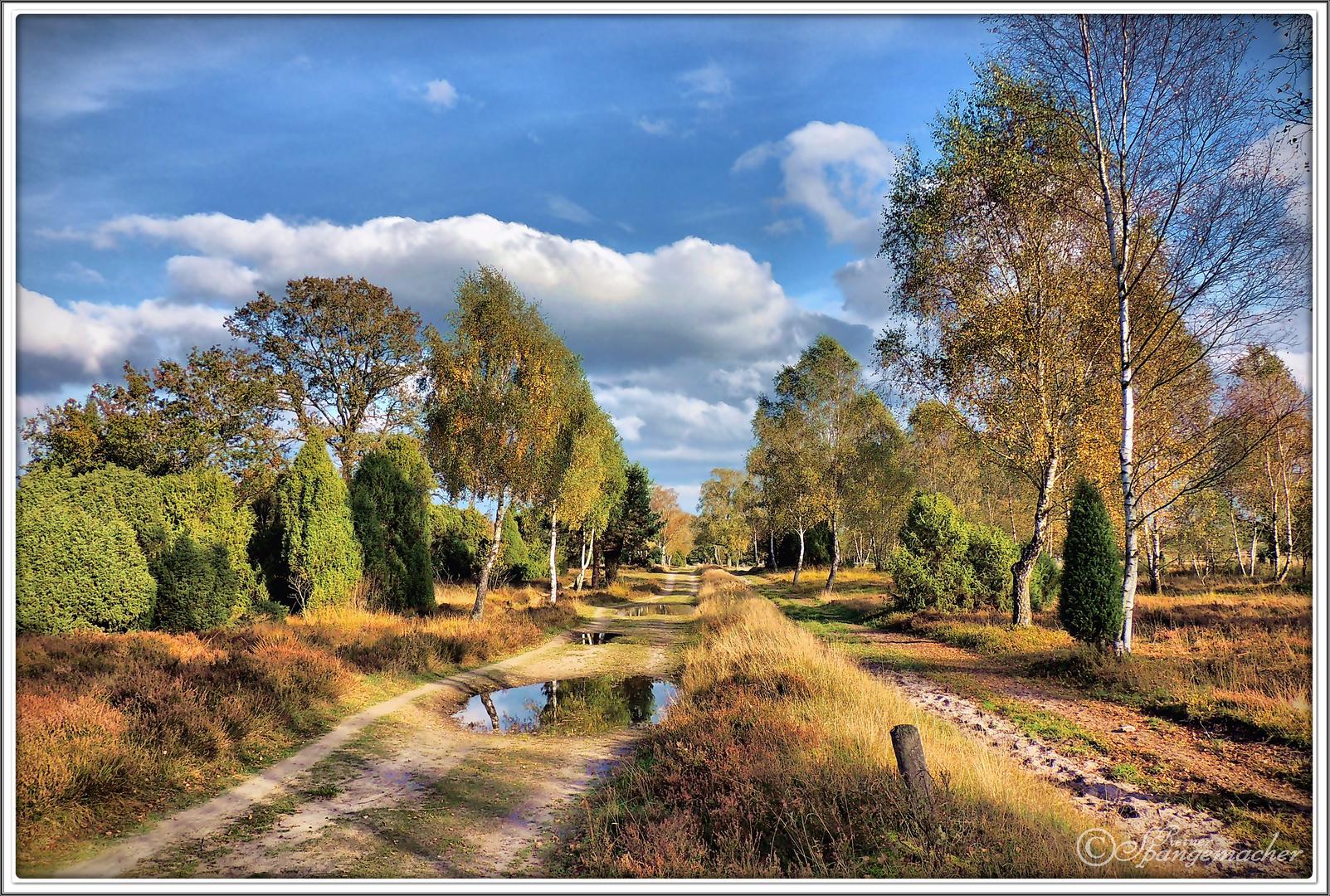 Herbst in der Lüneburger Heide