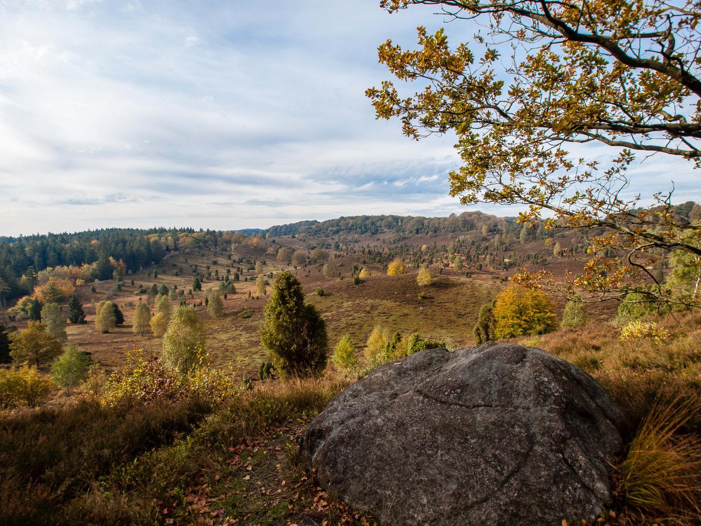 Herbst in der Lüneburger Heide II