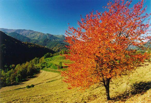 Herbst in der Serra de Puig Estrella