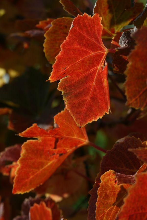 Herbst in der Südsteiermarkt