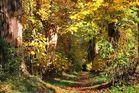 Herbst in der Tulpenbaumallee