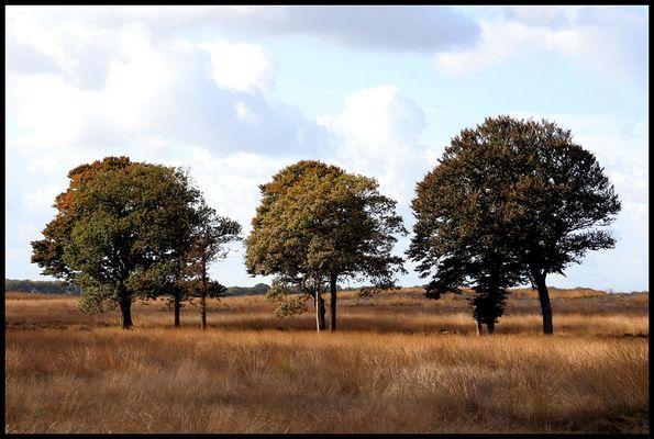 Herbst in der Veluwe