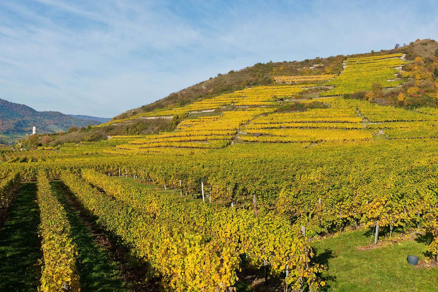 Herbst in der Wachau