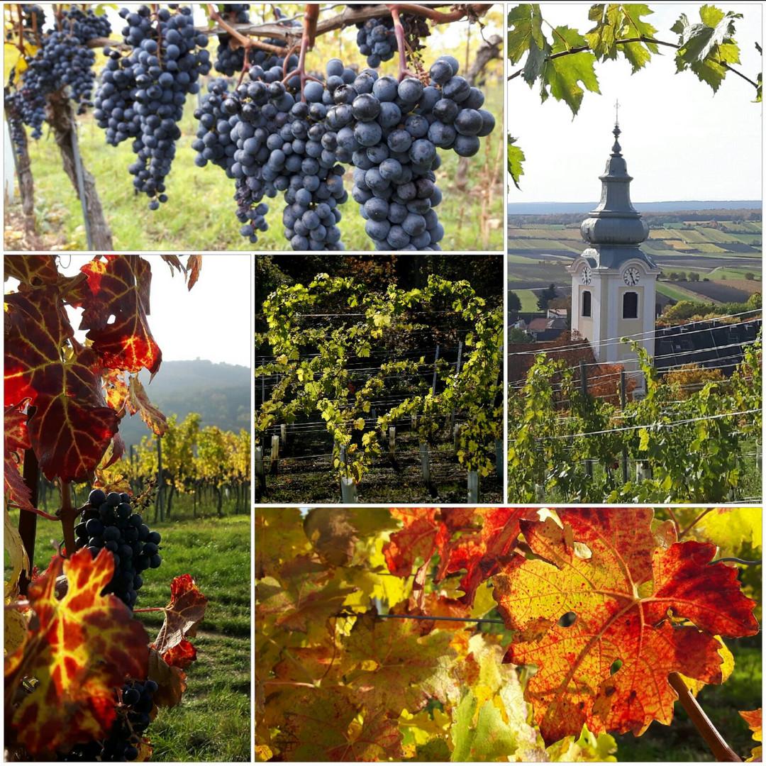 Herbst in der Weingegend um Bad Vöslau
