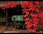 Herbst in Detzem/Mosel #4