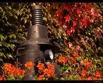 Herbst in Detzem/Mosel #5