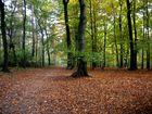 Herbst in Dinslaken...