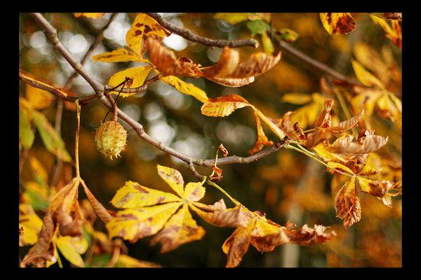 Herbst in Ebstorf