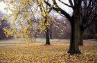 Herbst in Echtzeit
