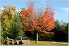 Herbst in Ettlingen