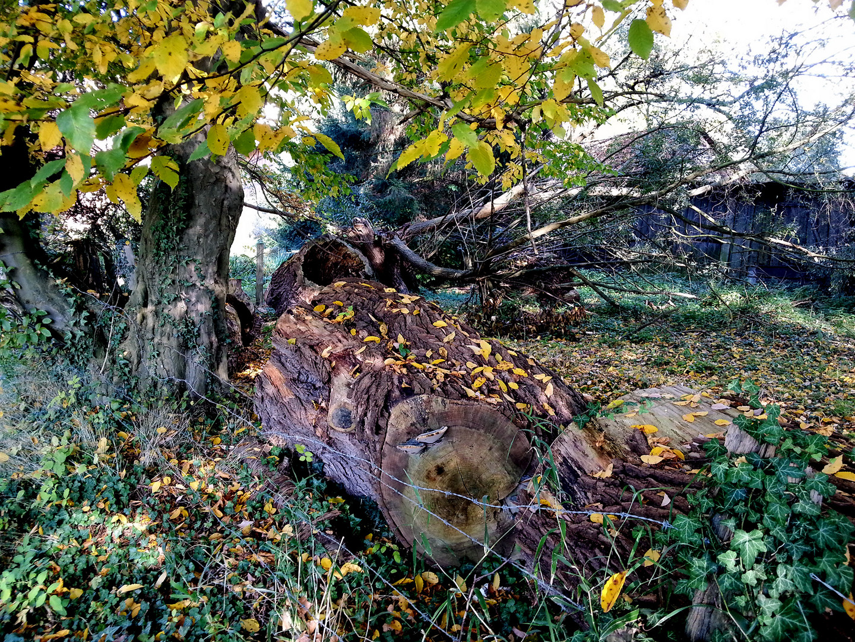 Herbst in Felsbergs Hinterhofgrundstücken3