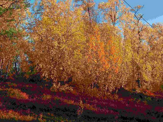 Herbst in Finnland II