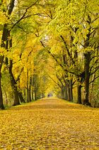 Herbst in Hannover_1