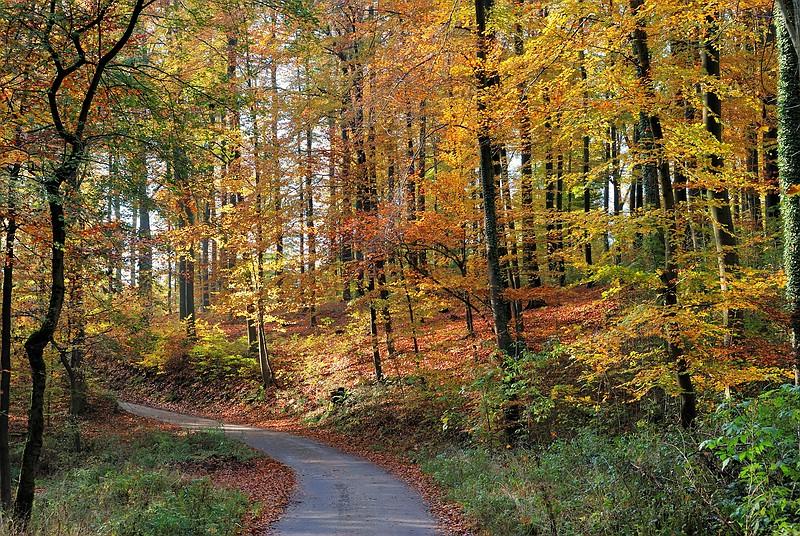 Herbst in Hoberge
