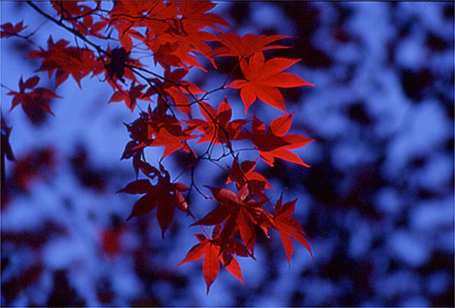 Herbst in Japan 2