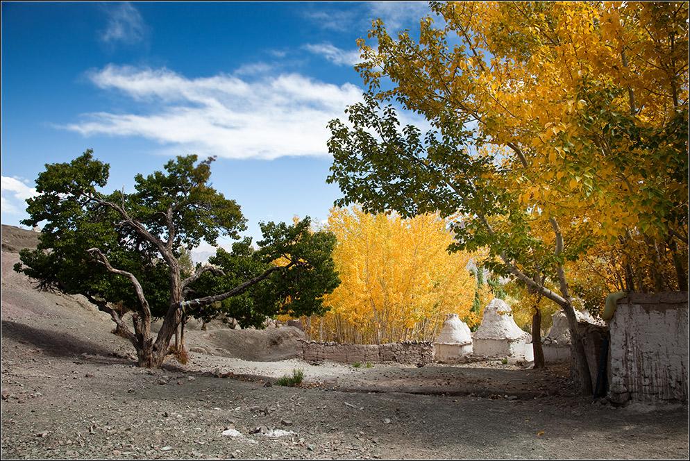 Herbst in Ladakh