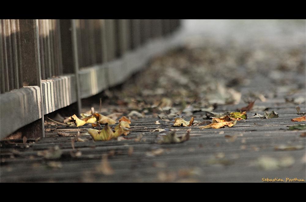 Herbst in Lauenburg