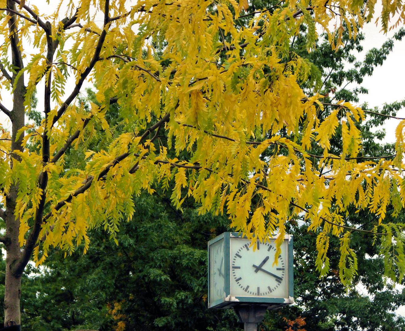 Herbst in Lippstadt