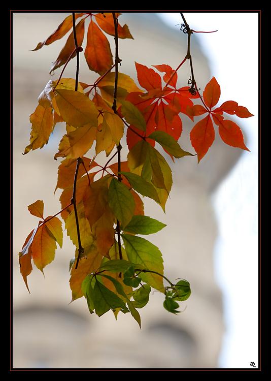 Herbst in Mannheim