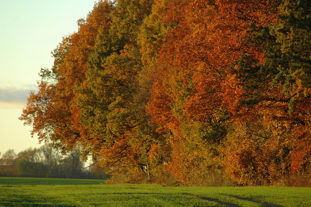 Herbst in Meck.-Pom.