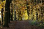 Herbst in Meck.-Pom.2
