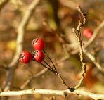 Herbst in Miniatur